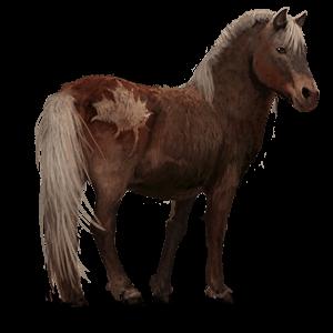 poney-ile-de-sable_v1828806360.png